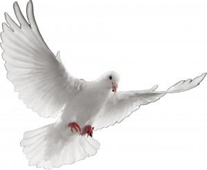 Dove-White